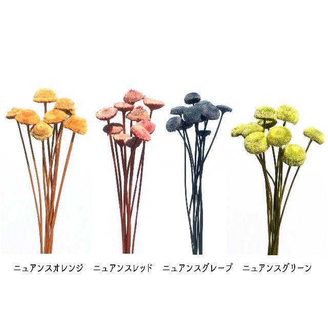 ボタンフラワー ニュアンスグレープ 10本 ハンドメイドのフラワー/ガーデン(ドライフラワー)の商品写真