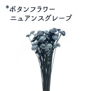 ボタンフラワー ニュアンスグレープ 10本(ドライフラワー)