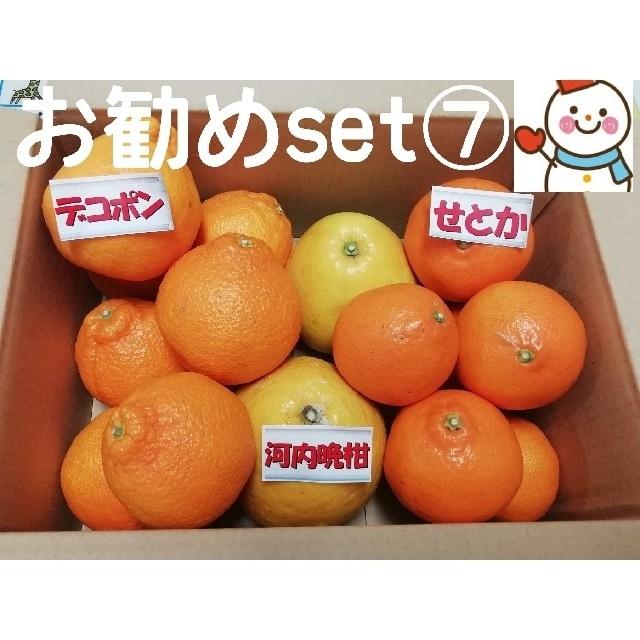お勧めset⑦❤️せとか&デコ&河内晩柑 食品/飲料/酒の食品(フルーツ)の商品写真