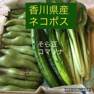 【土日限定発送】2点セット香川県産 新鮮野菜詰め合わせ