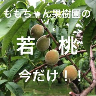 採りたて新鮮!!ももちゃん果樹園の若桃 青桃 加工用 即購入可能!!今しかない!