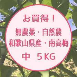 お買得!【無農薬・自然農】和歌山県産 南高梅 5㎏ 中