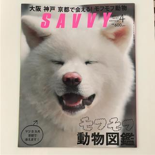 SAVVY 月刊サヴィ 2017.4月号 モフモフ動物図鑑