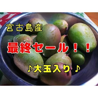 宮古島産 グリーンマンゴー 2.1キロ(野菜)