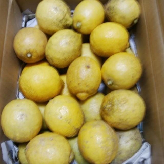 大崎上島産 無農薬レモン 2.5kg 食品/飲料/酒の食品(フルーツ)の商品写真