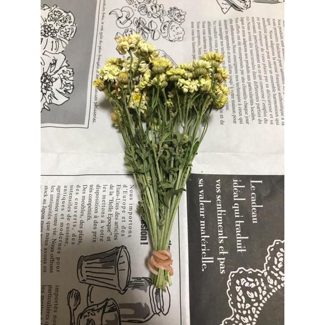 【ドライ】マトリカリヤ イエローワンダー 15本 10㎝ ハンドメイドのフラワー/ガーデン(ドライフラワー)の商品写真