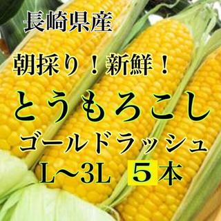 朝採り新鮮!とうもろこし L〜3L 5本 長崎県産 ゴールドラッシュ(野菜)