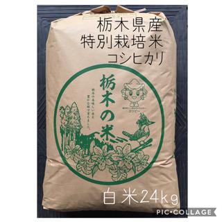 栃木産コシヒカリ【特別栽培米】白米24kg