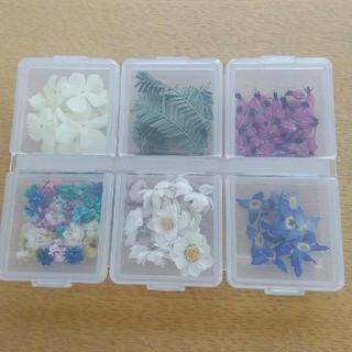 値下!花材101 ドライフラワーケース入 レジン封入などに最適な色々小花のセット(ドライフラワー)