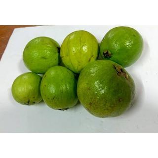 デザートやサラダに!人気の沖縄産グァバ無農薬 大玉入り3kg!