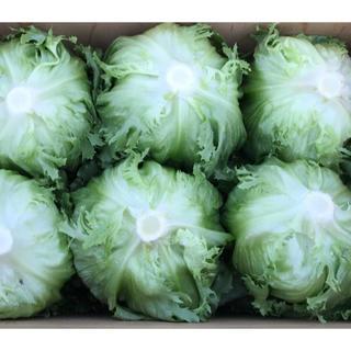 早朝採り新鮮野菜!大玉レタス シャキシャキ バリバリパリパリ 6個クール便