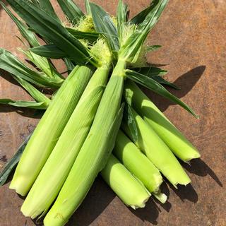 ヤングコーン(野菜)
