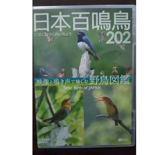 日本百鳴鳥202 DVD映像図鑑(絵本/児童書)