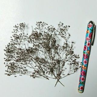 ソフトミニカスミ草のプラチナピンクの小分け(プリザーブドフラワー)