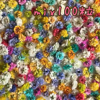 かすみ草 ドライフラワー   mix100粒(ドライフラワー)