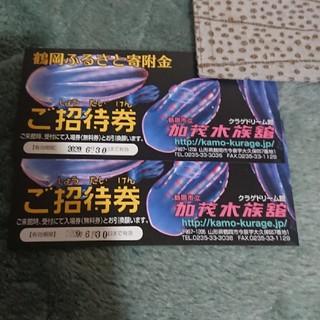 加茂水族館 クラゲドリーム館山形県鶴岡市 チケット2枚(水族館)