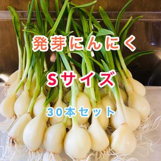 発芽にんにく   Sサイズ   30本  約210g(野菜)