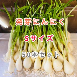 発芽にんにく   Sサイズ   50本   約350g(野菜)