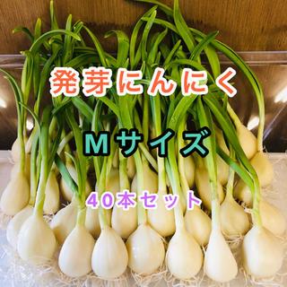 発芽にんにく   Mサイズ   40本   約675g(野菜)