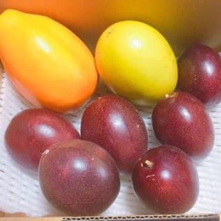 入手困難な希少種も!人気の沖縄産パッションフルーツ3種セット(フルーツ)