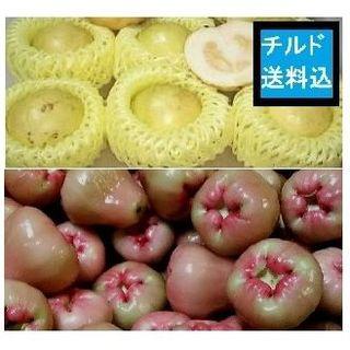 『本日の果物』 沖縄産 レンブ グァバ白(柔らか品種)(フルーツ)