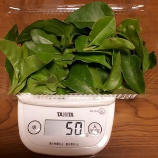 オカワカメ 栄養野菜(野菜)