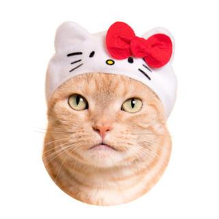 サンリオ(サンリオ)のかわいい かわいい ねこサンリオ ハローキティとKIRIMI(猫)