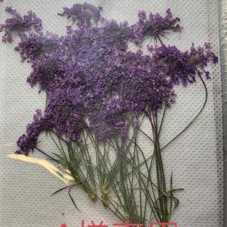 押し花6本1袋  紫(ドライフラワー)