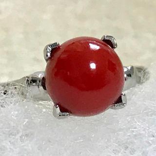 天然血赤珊瑚 silver リング 約11号(リング(指輪))