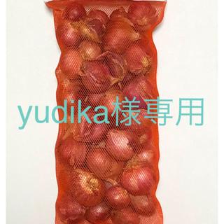 ホムデン 赤たまねぎ レッドシャロットオニオン(野菜)