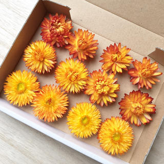 花材セット ヘリクリサム オレンジ ドライフラワー ハーバリウムなどに♪(ドライフラワー)