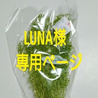 LUNA様専用ページ(プリザーブドフラワー)