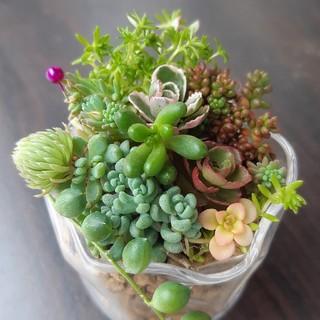 小さな つぶつぶ寄せ植え 多肉植物①(その他)
