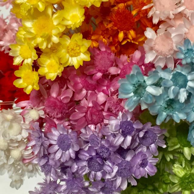 スターフラワー☆ブロッサム☆ミニ ハンドメイドのフラワー/ガーデン(ドライフラワー)の商品写真