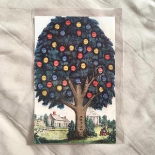 John Derian ジョンデリアン ポストカード  health tree
