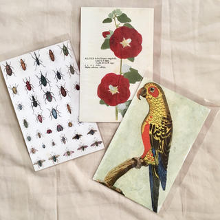 John Derian ジョンデリアン ポストカード 3枚セット 鳥 葵 昆虫