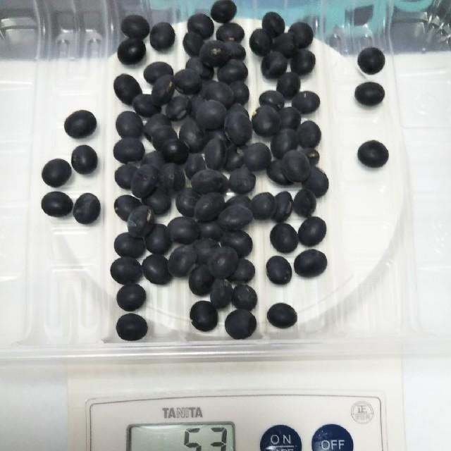 残り僅か 平成30年産 種子 丹波黒大豆 約70〜80粒 40g ぶどう豆 食品/飲料/酒の食品(米/穀物)の商品写真