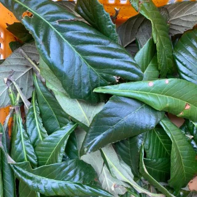無農薬★ビワ★ビワの葉 食品/飲料/酒の食品(フルーツ)の商品写真