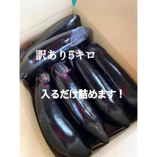 お得★訳あり長茄子約5キロ 食品/飲料/酒の食品(野菜)の商品写真