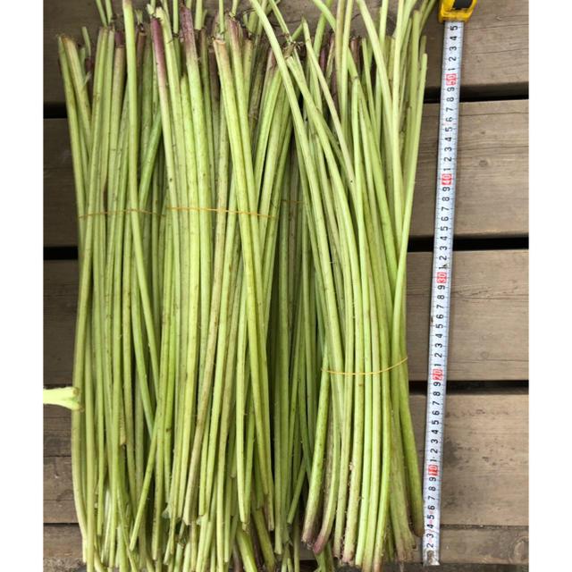 完全無農薬 蕗(ふき) 4キロ 食品/飲料/酒の食品(野菜)の商品写真