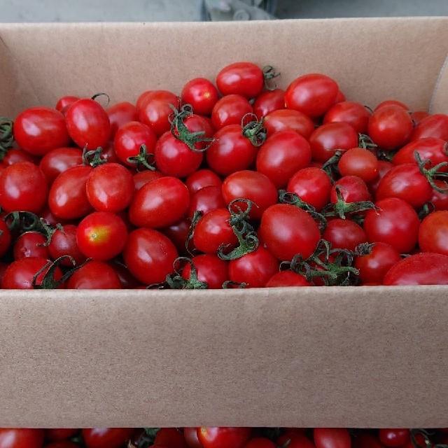8【農家直送!感謝価格】京都産 高糖度 稀少 フルーツミニトマト バラ2㎏ 食品/飲料/酒の食品(野菜)の商品写真