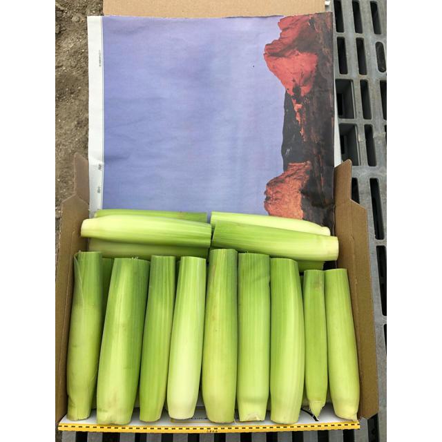 ヤングコーン 即購入○ 食品/飲料/酒の食品(野菜)の商品写真