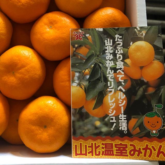 みき18098721様専用  ハウスみかんS 食品/飲料/酒の食品(フルーツ)の商品写真
