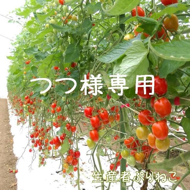 つつ様専用 アイコ6kg ミニトマト 食品/飲料/酒の食品(野菜)の商品写真