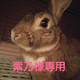 ハニーズ(HONEYS)の◆◆紫乃様専用!◆◆(ショートパンツ)