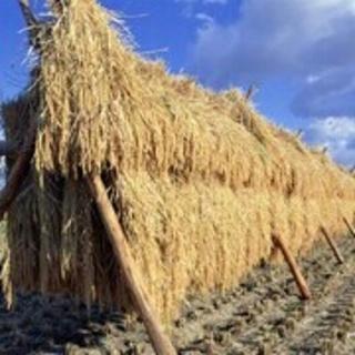 大山山麓無農薬無化学肥料栽培天日干しコシヒカリ5kg 卵30個【送料込】(米/穀物)