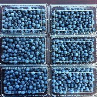 農園の新鮮ブルーベリー 1.2キロ(フルーツ)