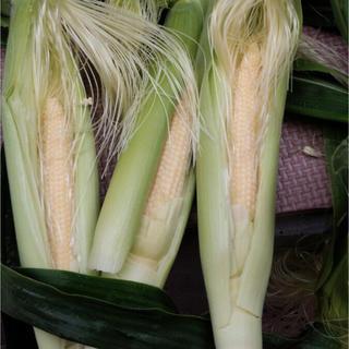 ベビーコーン  ヤングコーン(野菜)