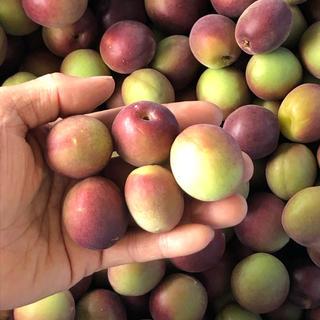 【超珍種】紫南高梅 2kg L〜2L(フルーツ)