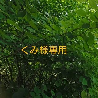 バンボ(Bumbo)のくみ様専用(その他)